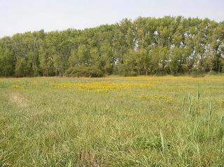 Sedlec - slanisko u Nesytu